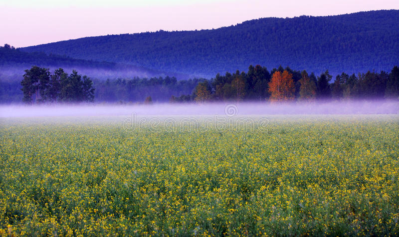 естественный пейзаж стоковое фото rf