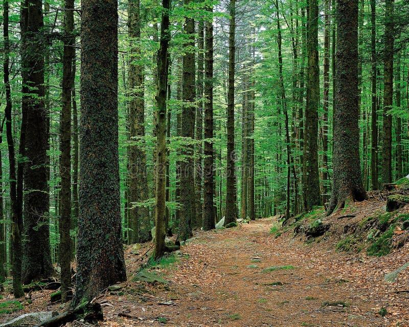 естественный пейзаж стоковое изображение