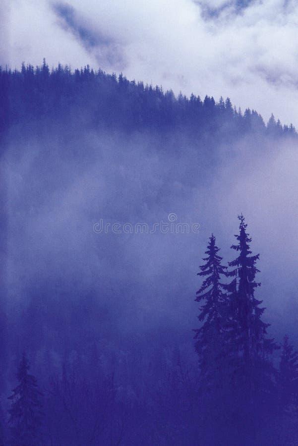 естественный пейзаж стоковая фотография