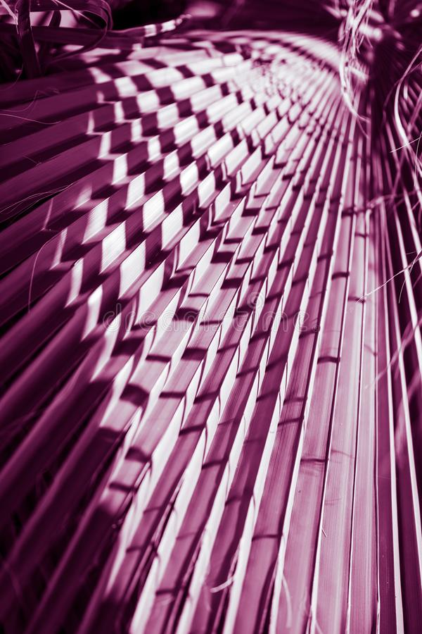 естественный плакат принятое солнечное ладони листьев дня closeup пурпурово стоковые фотографии rf