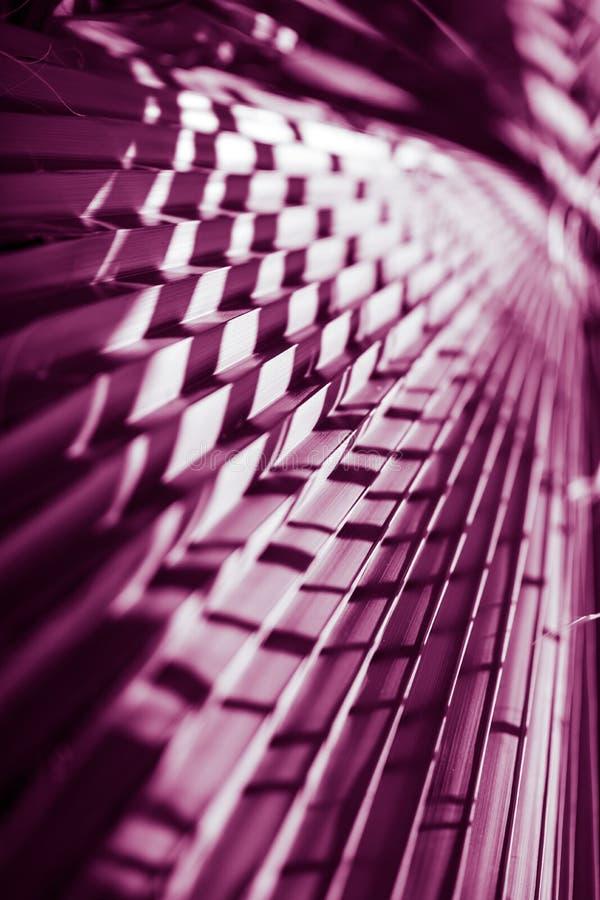 естественный плакат принятое солнечное ладони листьев дня closeup пурпурово стоковое фото