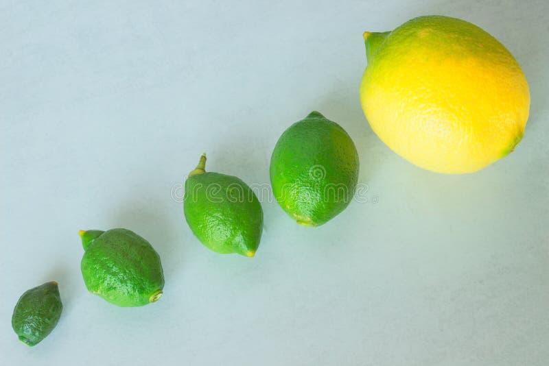 Естественный прирост лимона Концепция - развитие, развитие стоковые фотографии rf