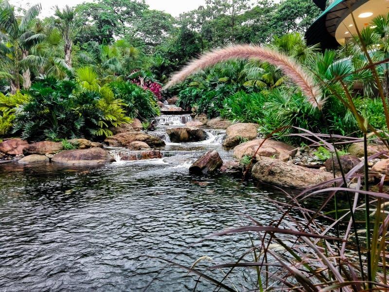 естественный пруд стоковое фото