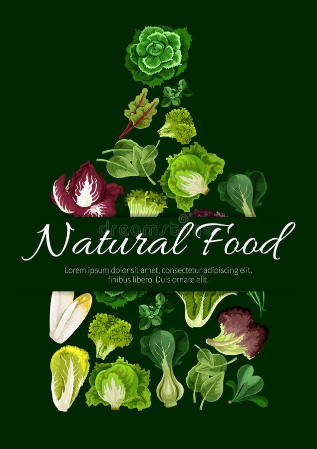 Естественный плакат еды густолиственных зеленых цветов салата бесплатная иллюстрация