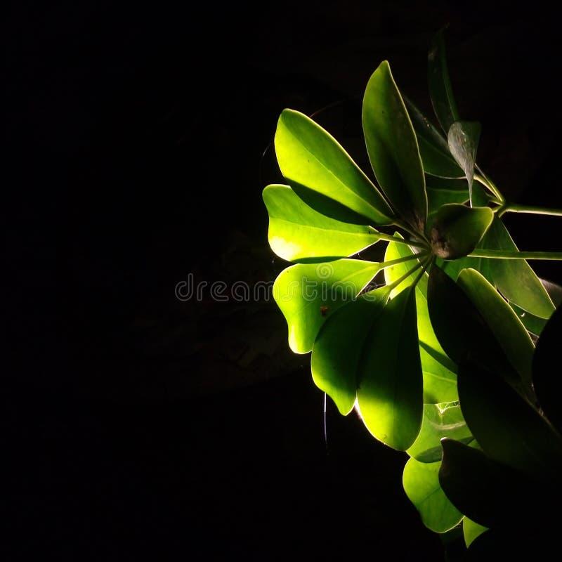 Естественный свет или громкоговоритель стоковые изображения rf