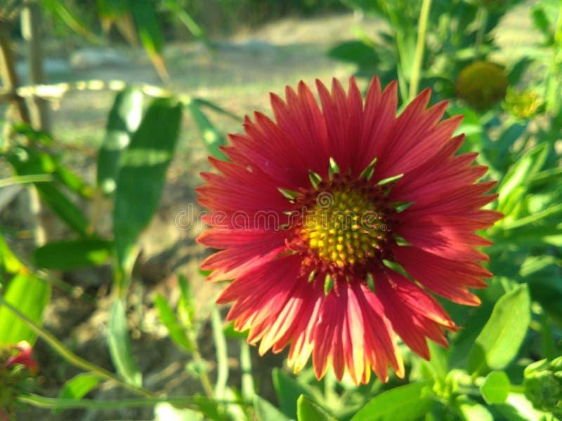 Естественный цветок стоковые изображения rf