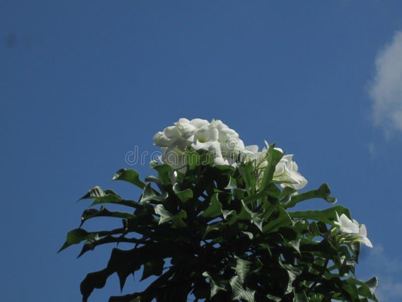 Естественный цветок crchid Шри-Ланка стоковая фотография