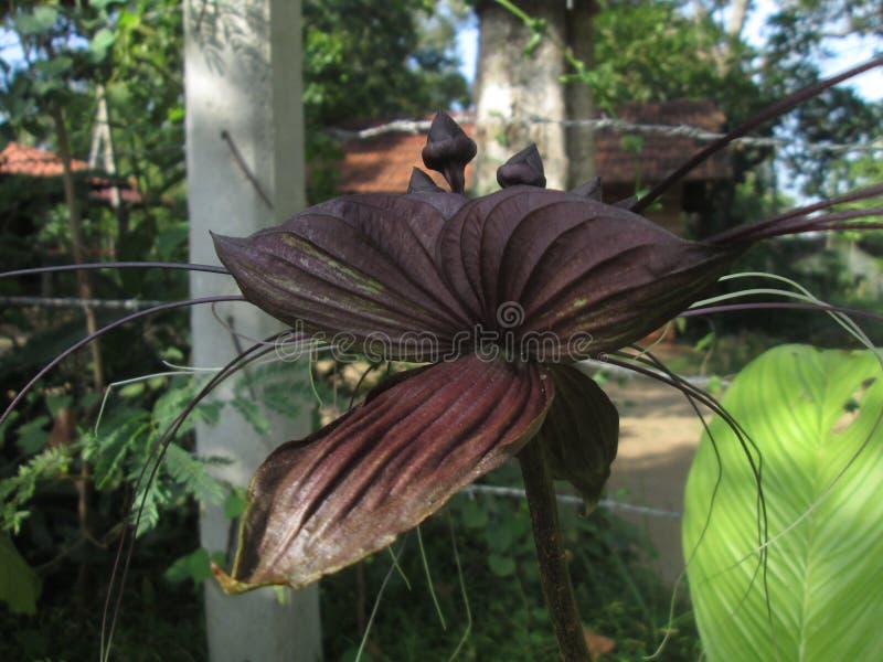 Естественный цветок crchid Шри-Ланка стоковые изображения