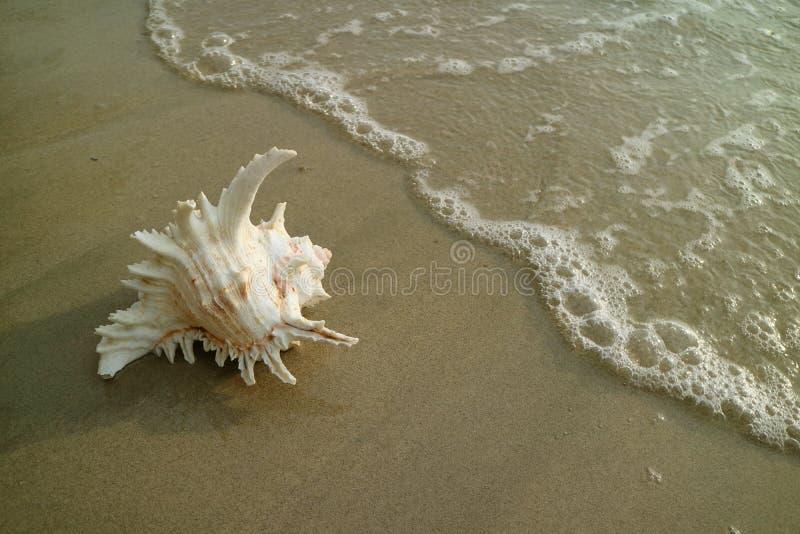Естественный Seashell на пляже причаливая пузырем волны моря, Таиланда стоковая фотография