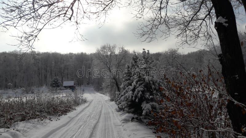 лес России зимы стоковые изображения rf