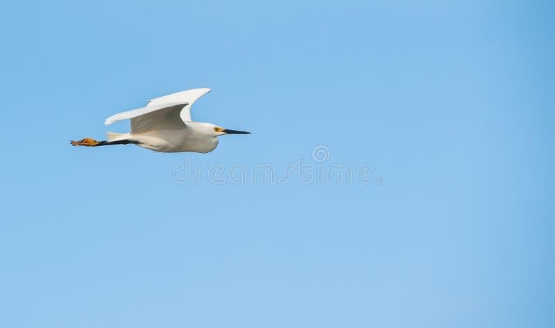 летание южное стоковое изображение