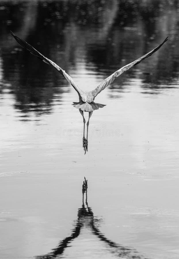 летание v стоковое изображение