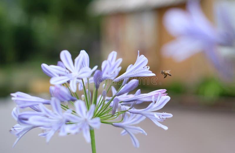 дети пчелы летают иллюстрации стоковая фотография