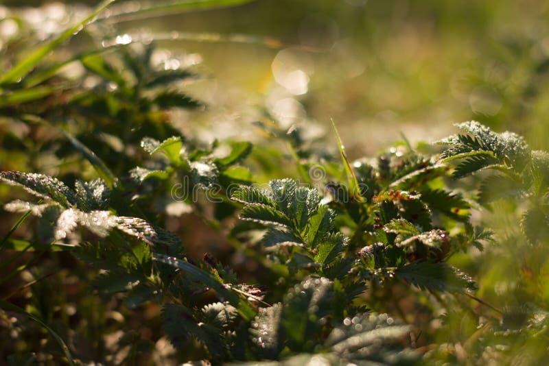 лето завода травы одного нерезкости предпосылки стоковые изображения rf