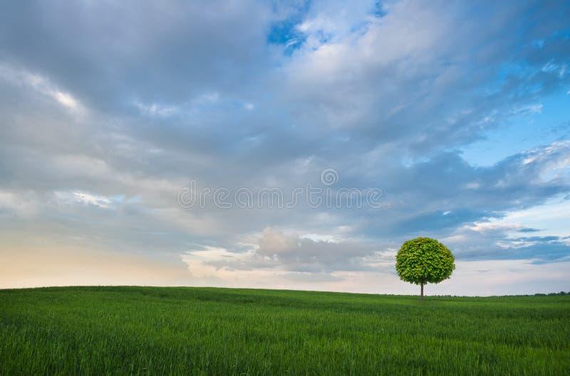 Download лето поля зеленое стоковое фото. изображение насчитывающей природа - 40584782