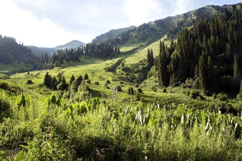 лето серии природы гор стоковые изображения rf