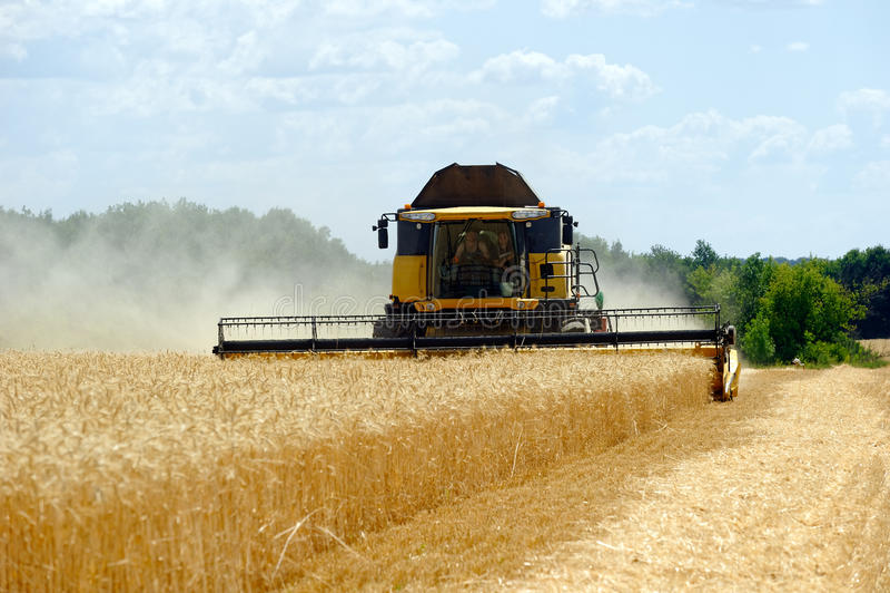 деятельность пшеницы жатки поля зернокомбайна стоковое фото