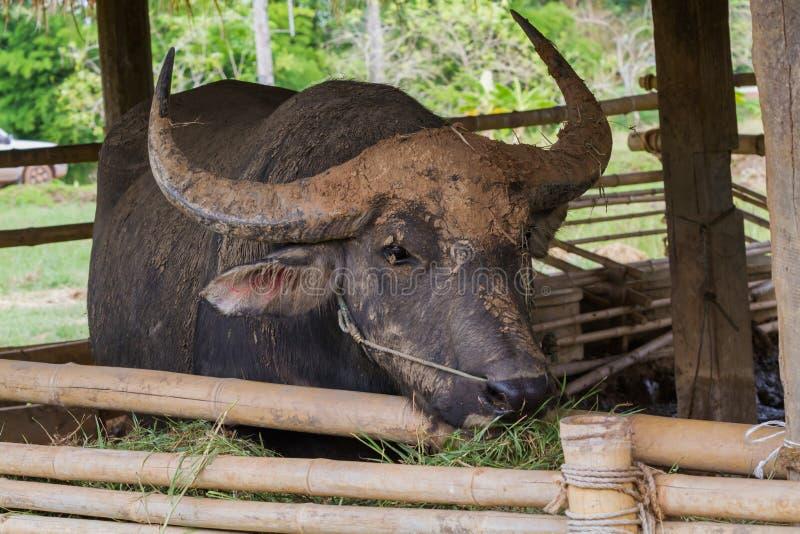 Download Еда буйвола стоковое фото. изображение насчитывающей развилки - 40591084