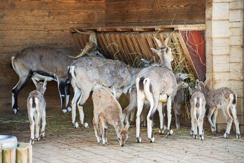 Еда животных стоковые фото