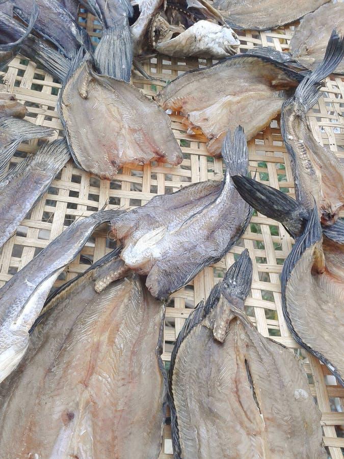Еда сухих рыб сырцовая стоковые изображения rf