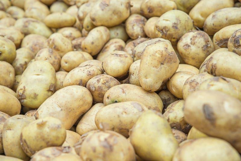 Еда сырцовых овощей картошек в рынке для текстуры картины и b стоковые изображения