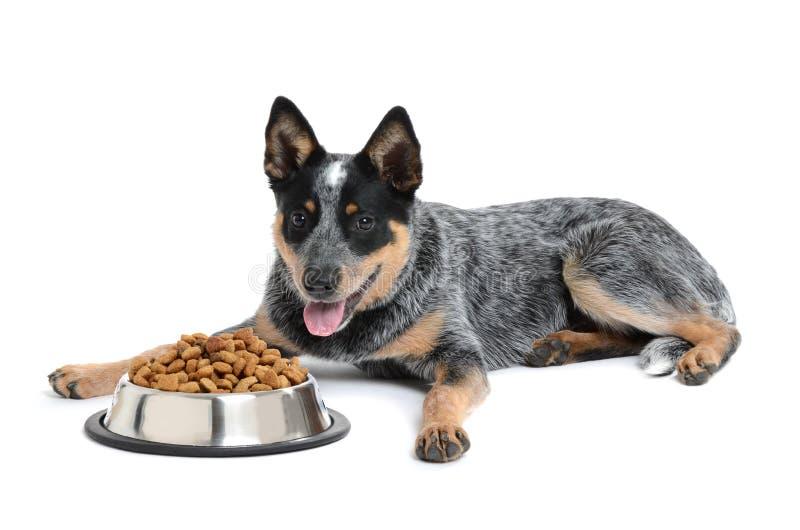 Еда щенка стоковая фотография