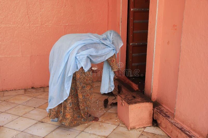 Еда для крыс, висок индийской женщины предлагая Karni Mata, Deshnok, стоковые изображения rf