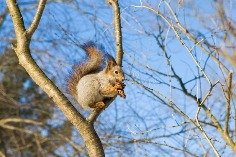 еда nuts белки стоковые фото