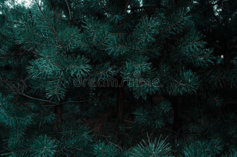 елевые детеныши стоковое изображение