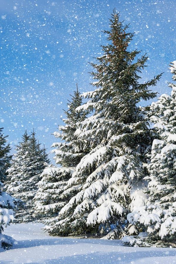 Ели ландшафта зимы с снегом стоковое изображение rf