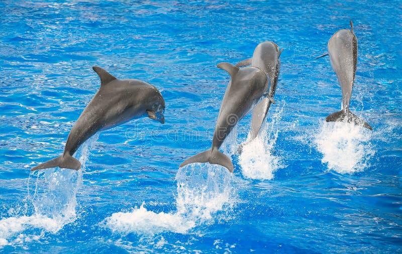 дельфины 4 стоковое фото rf