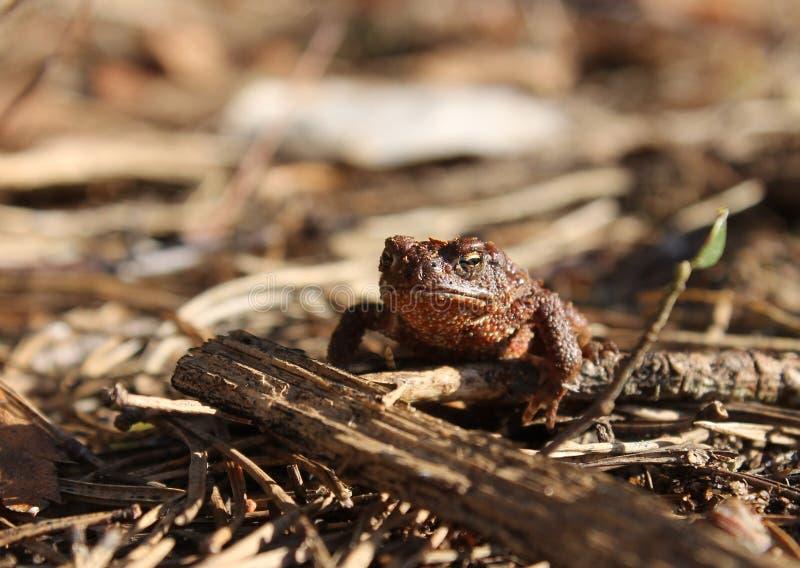 Жаба в лесе стоковые фото