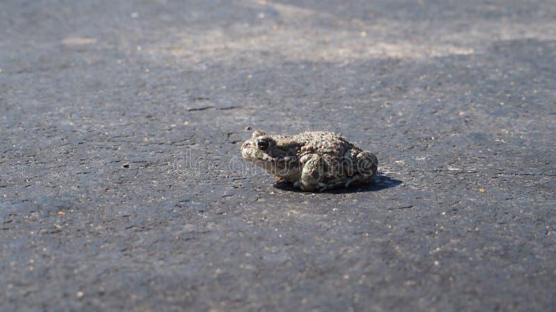 Жаба в жаре стоковое изображение