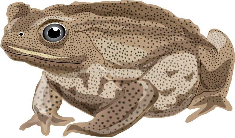 жаба иллюстрация вектора