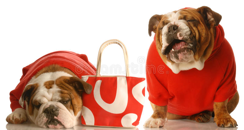жалуясь деньги собак над 2 стоковое фото