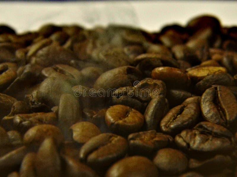 Жарит в духовке кофейные зерна над которыми дым стоковые изображения