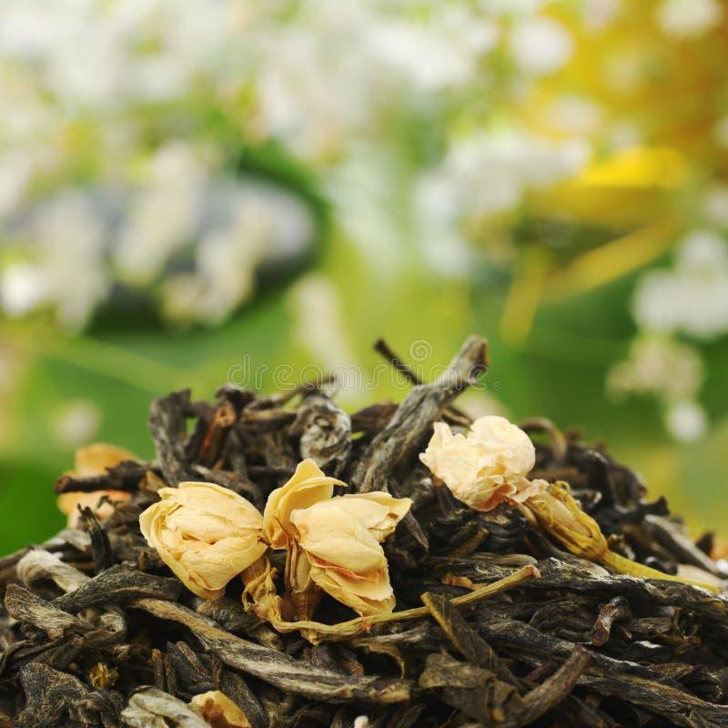 жасмин освобождает чай стоковое фото