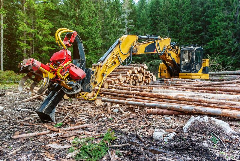 Жатка в обработке древесины леса основной, подрезая ветви трактора машины Woodworking обезлесение стоковые изображения