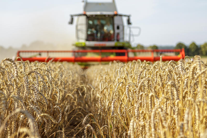 Жатка зернокомбайна в поле пшеницы стоковое фото