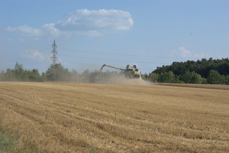 Жатка зернокомбайна жать зерно и обрабатывая ее и лить ее в трейлер вытянула трактором стоковая фотография