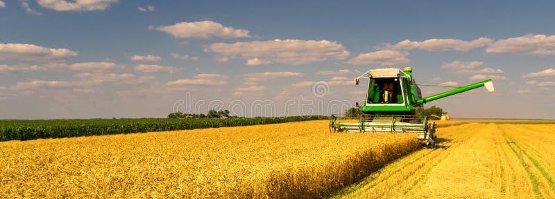 Жатка зернокомбайна работая на пшеничном поле стоковое фото