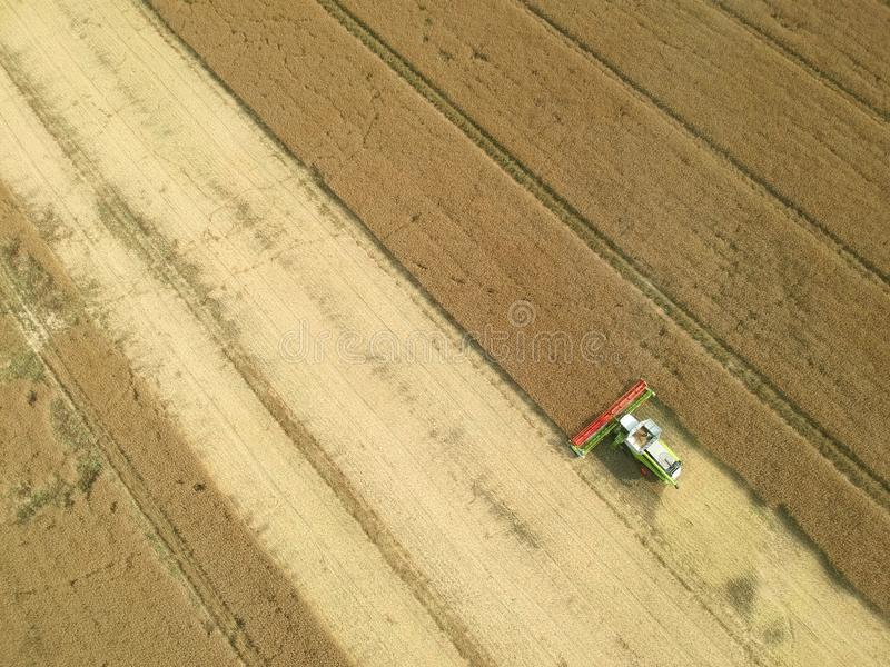 Жатка зернокомбайна собирая зерно на пшеничном поле, виде с воздуха сбора стоковое изображение rf