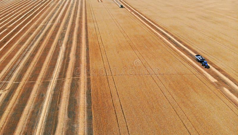 Жатка и трактор в поле жать пшеницу r стоковое изображение rf