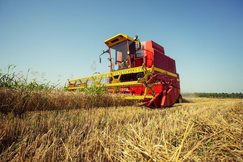 Жатка комбайна работая на пшеничном поле стоковые фотографии rf