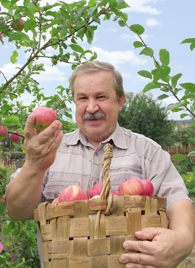 жать яблока стоковые фото
