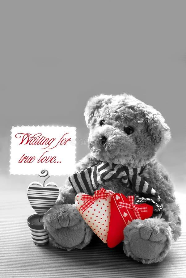 ждать игрушечного влюбленности медведя истинный стоковое фото