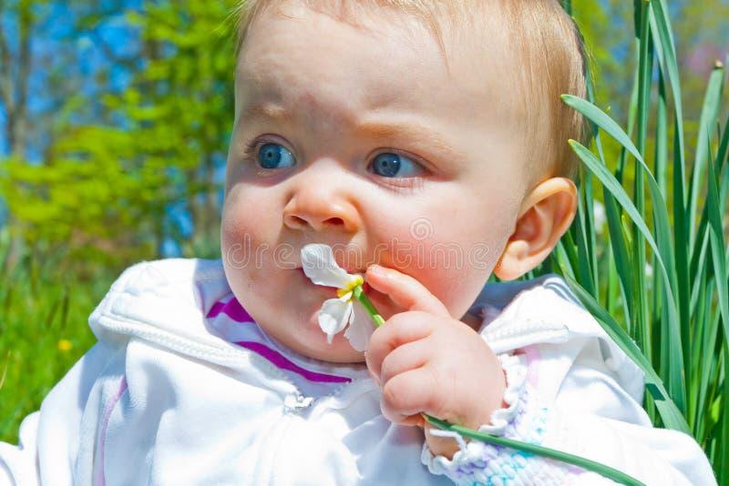 Жевать на цветке стоковая фотография rf