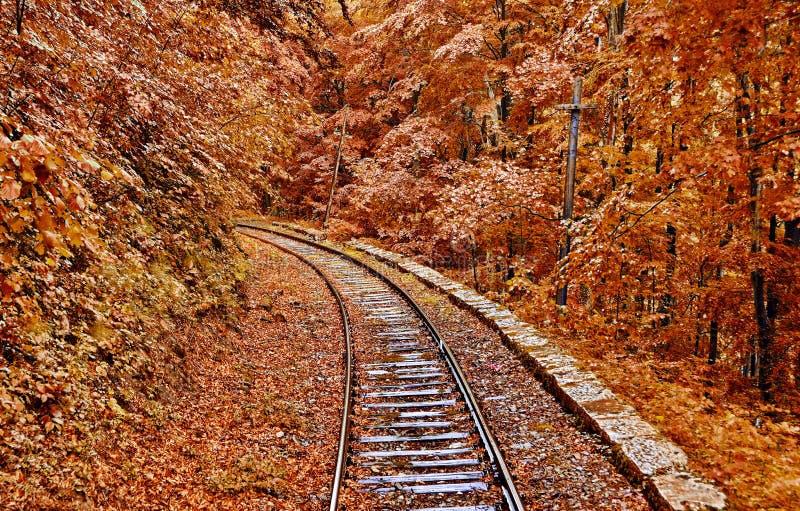 Железная дорога леса осени стоковая фотография rf