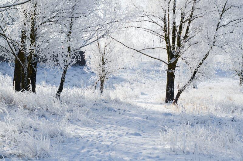 Железнодорожный путь в зимнем парке, покрытый снегом стоковая фотография
