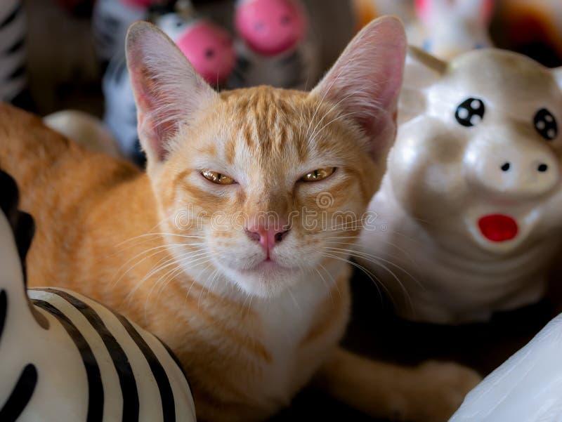Желтая Белая Кити Спит Счастливо стоковая фотография